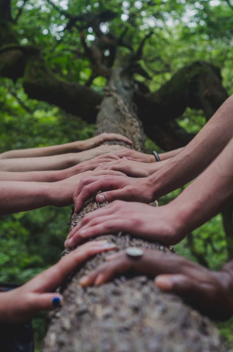 hands holding onto branch